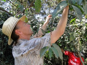 Trond Valdez picks every bean by hand.