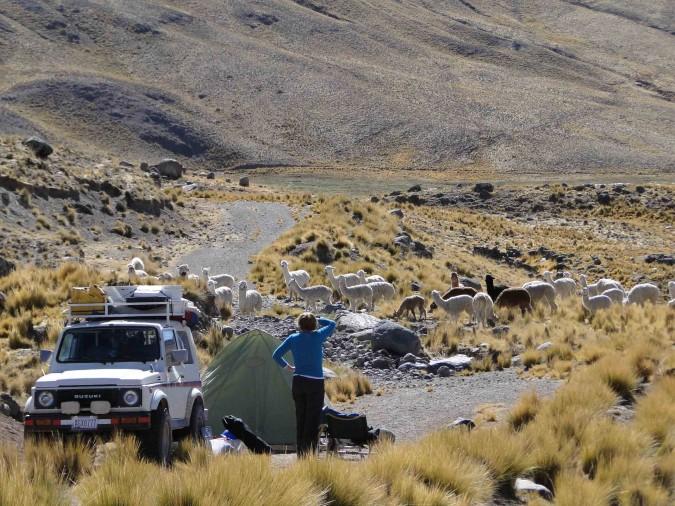Llama stampede near Laguna Lagunillas in southern Peru.